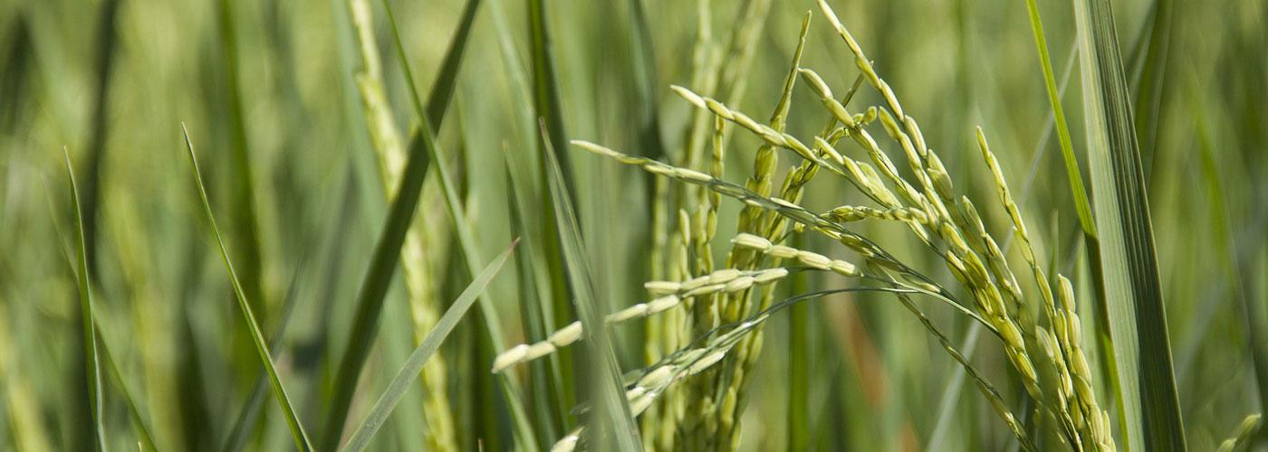 RdL – Zeitschrift für Landwirtschaftsrecht